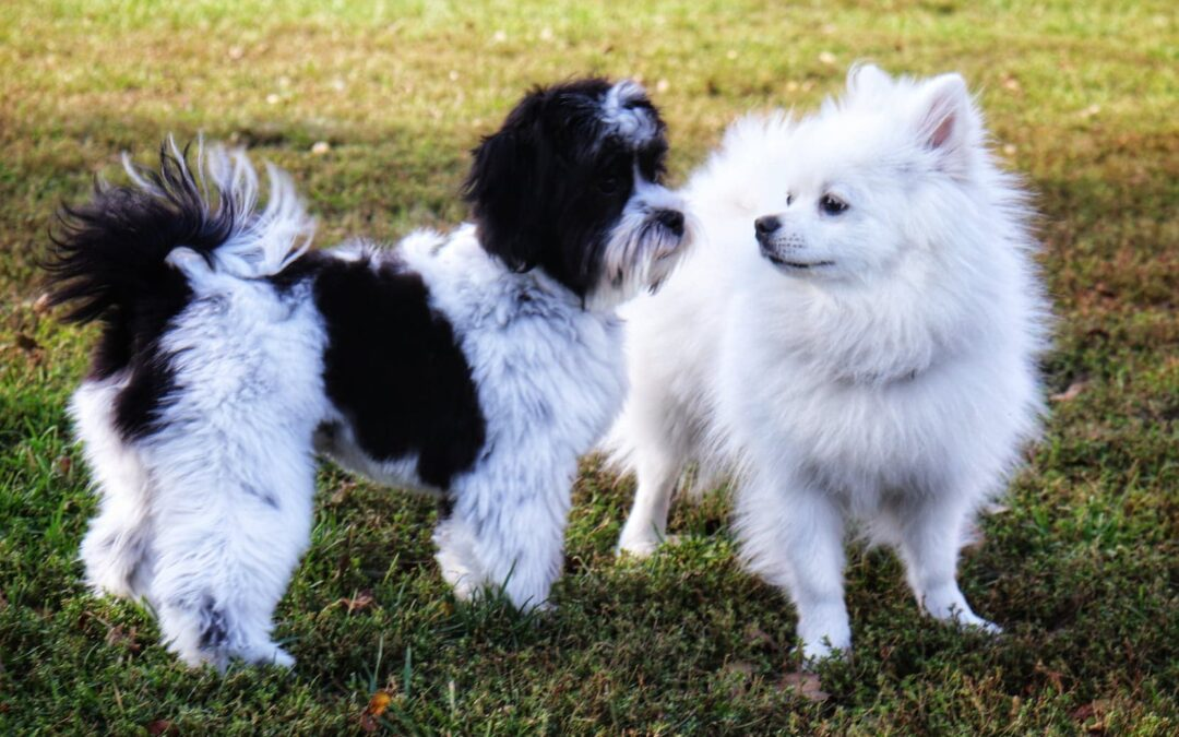 6 Reasons to Vacation In Kingston With Your Dog