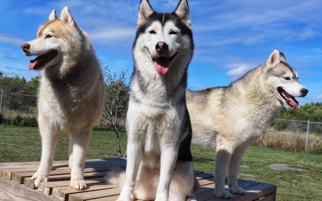6 Simple Health Benefits Of Doggie Daycare
